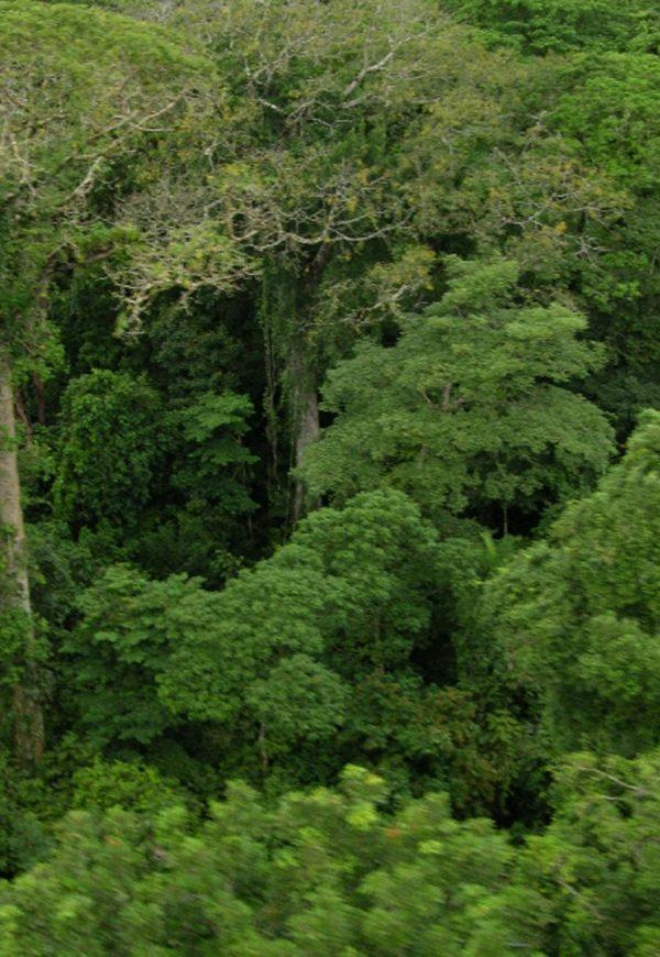Excursión La Granja Canopy