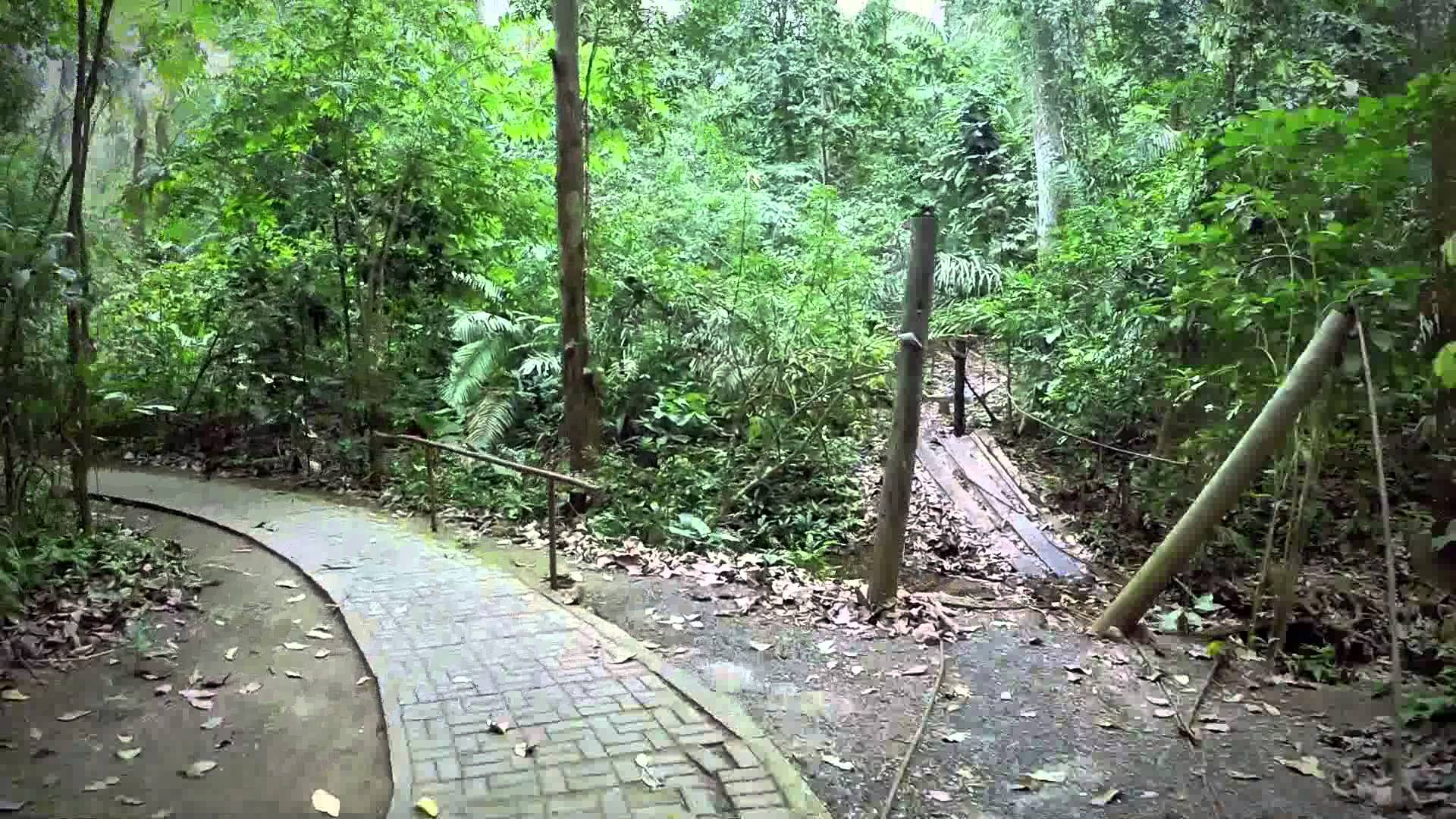 Excursión Parque Nacional Soberanía